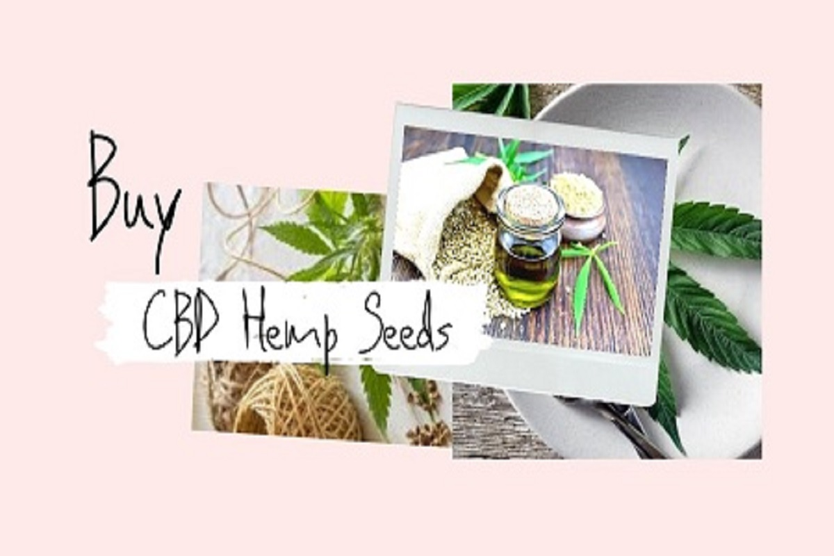 Buy CBD hemp seeds