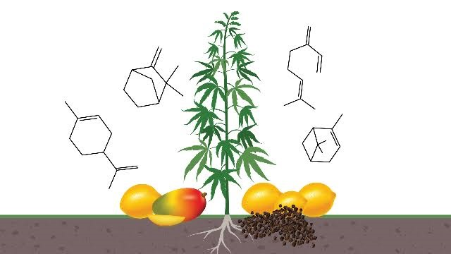 Difference between Terpenes and Cannabinoids