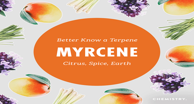 Myrcene Effects