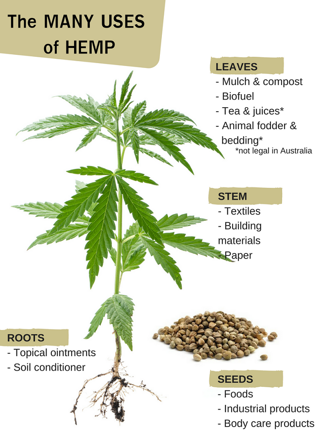 Hemp-has-so-many-uses