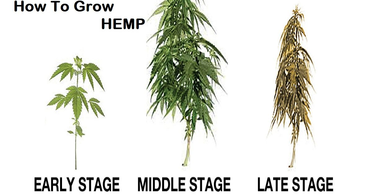 How To Grow Hemp The Hemp Farming 101 Guide
